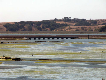 Elkhorn Slough wetlands