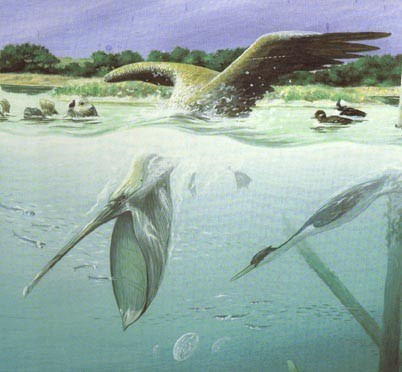 diving pelican from mural in VC