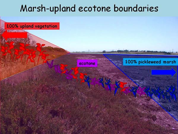 Restoration Of The Marsh