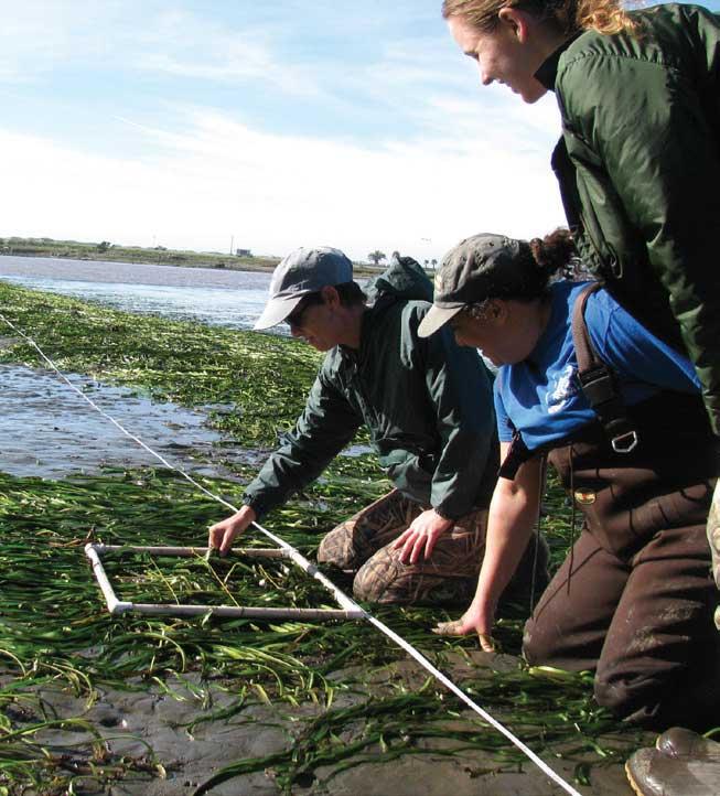 Teachers On The Estuary Workshop